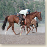 Horsemanship camp playing polo cross